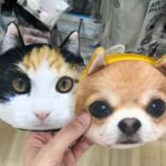 cat and dog bag